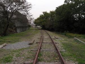 網干鉄道廃線跡に張り出す木
