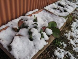 2010年12月初雪
