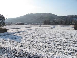 3月雪の多可町の朝
