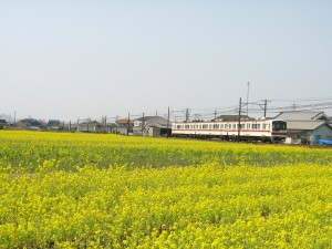 菜の花畑神鉄葉多駅