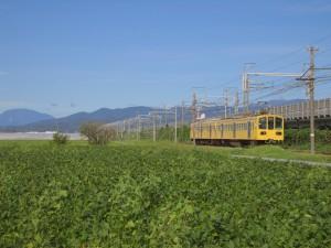 近江鉄道の黄色い電車と伊吹山