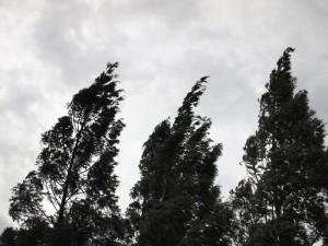 風に傾く木々