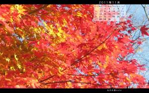 11月ワイド版壁紙多可町中央公園の紅葉1