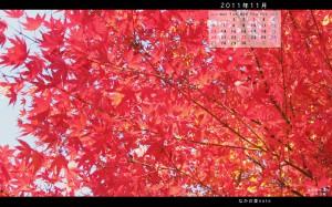 11月ワイド壁紙多可町中央公園2