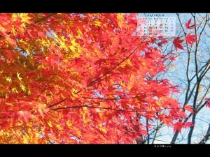 11月ノーマル壁紙1多可町中央公園の紅葉1