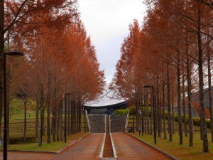 日本へそ公園メタセコイア並木