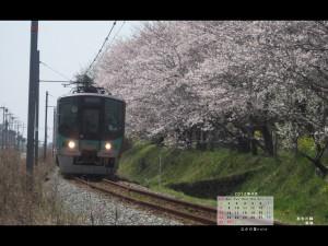 2012年4月4対3画面用壁紙板場の桜並木