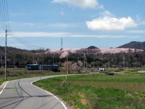 満開の桜の播磨中央公園と加古川線