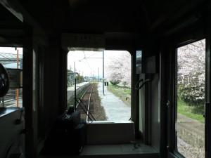 青野ヶ原駅と桜