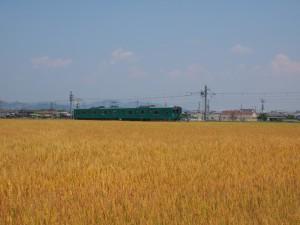 麦秋の加古川線103系