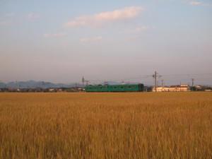 夕日に染まる麦畑と加古川103系