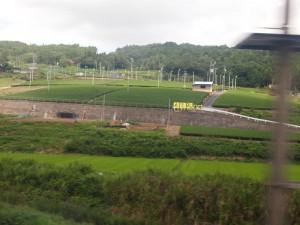 金谷茶の産地