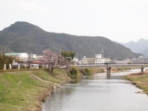 地蔵一本桜130323(36)