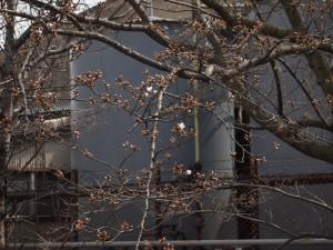 第一前桜130323(5)