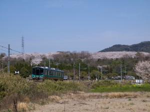 加古川線と播磨中央公園の桜2013年4月4日