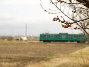 未だ咲かない梅と加古川103