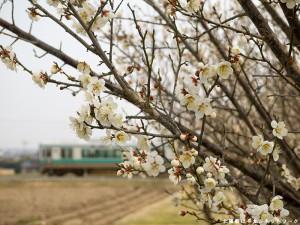 加古川125系と梅