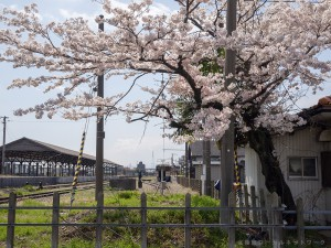 桜が迎える終着駅美濃赤坂