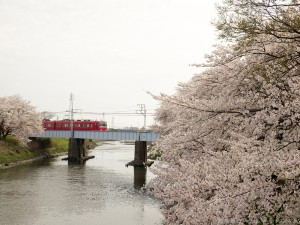 五条川の桜と名鉄電車1