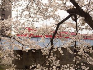 桜越しに名鉄電車