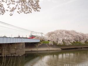五条川の桜とパノラマSuper