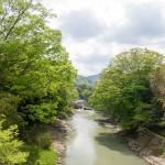 広田の吊り橋から見た篠山川の新緑