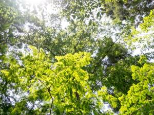 梅雨の合間の木漏れ日