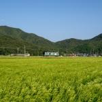 黒田の里をゆく加古川線