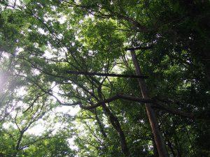 森の中にたたずむ架線柱