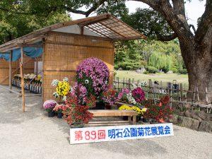 明石公園菊花展