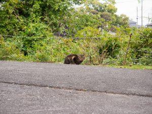 明石公園のネコ