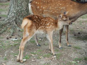 子鹿バンビ柄